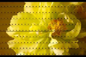 flower48